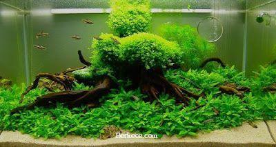Cara Membuat Aquascape Mudah Untuk Pemula Planted Aquarium Aquascaping Tanaman Air