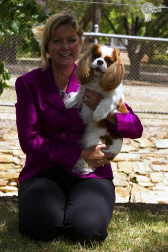 Ch Brades In Vogue Owned By Bronwyn Schmidt Cavalier King