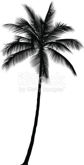 Download this Palm Tree vector illustration now. And search more of iStock's library of royalty-free vector art that features Black And White graphics available for quick and easy download.