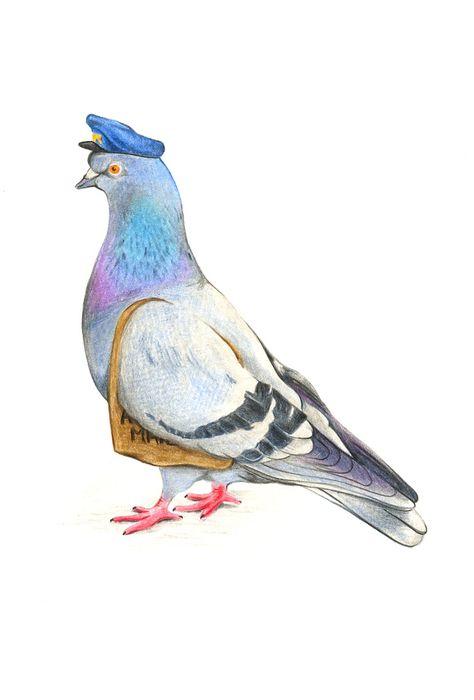 цветные картинки голубя тратить
