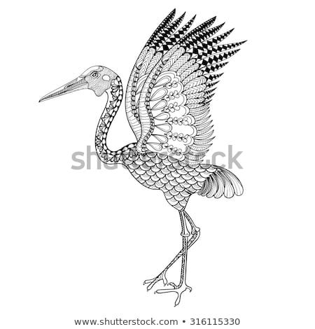 Hand Drawn Brolga Australian Crane Illustration For Antistress