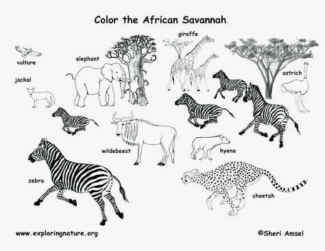 Africa Animals Coloring Page Fascinating Zoo Animals Coloring