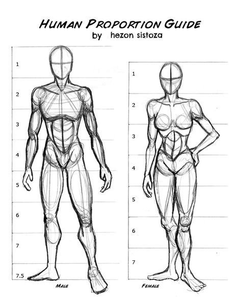 Proportions Du Corps, Drawing Body Proportions, Human Body Drawing, Human Sketch, Drawing Body Poses, Body Reference Drawing, Human Figure Drawing, Guy Drawing, Anatomy Reference