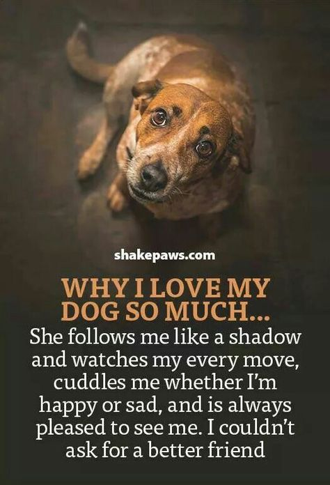 Pin By Lisalisad On Pets Dog Quotes Dogs I Love Dogs