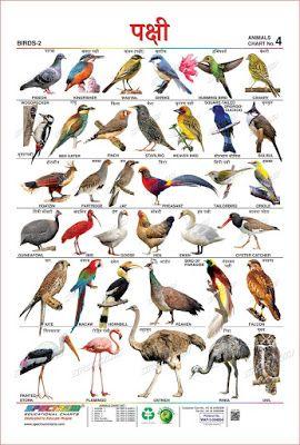 Birds Name In Marathi पक ष य च न व मर ठ त In 2020 Birds Information About Birds All Birds