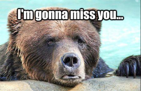 Funny I Miss You Memes 2018 I Miss You Memes For Him Her I Miss You Meme Miss You Funny Missing You Memes