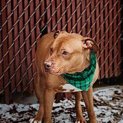 Pin On Animals Needing A Home
