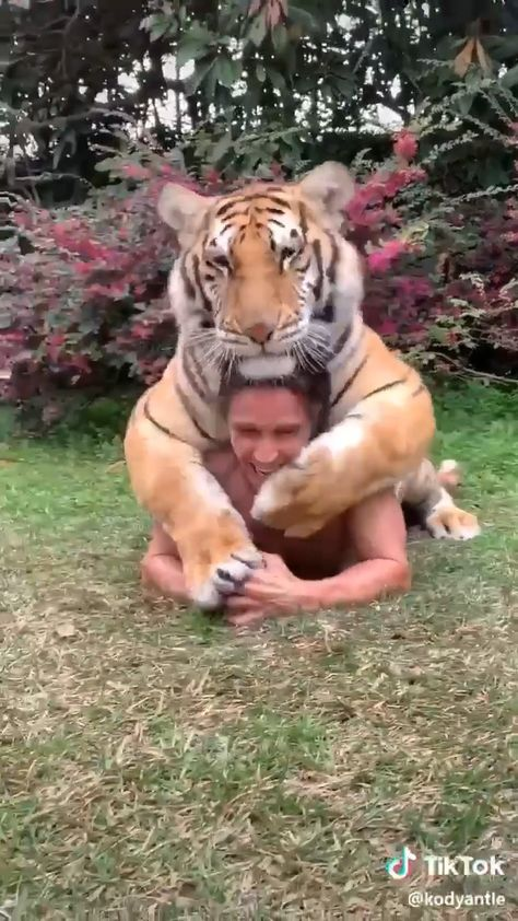 Cute overloads😍😘😍 #tiger #animals #animal #pets #tigers #puppies #nature #pet #puppy puppy, pets, pet, puppie, animals, animal, puppies, tiger, tigers