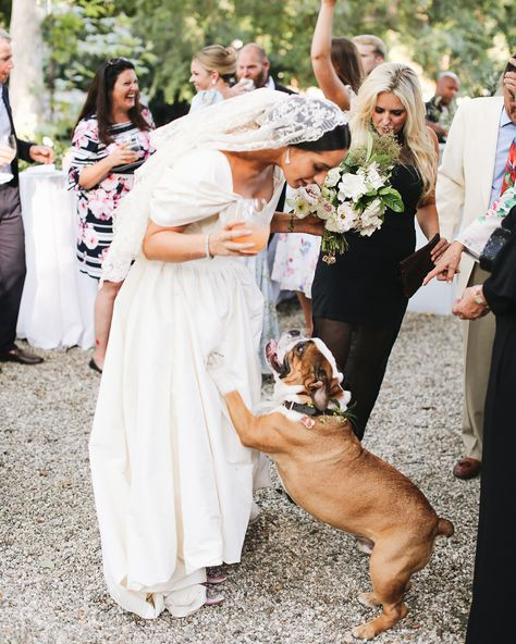 Exclusive: LPA Designer Pia Baroncini's Wedding—Held at Her Childhood Home in Pasadena—Was a Beautiful Tribute to Her Parents' Love Vogue Wedding, Wedding Bride, Wedding Dogs, Wedding Hair, Wedding Stuff, Wedding Gifts, Getting Married In Denmark, Vintage Veils, Successful Marriage