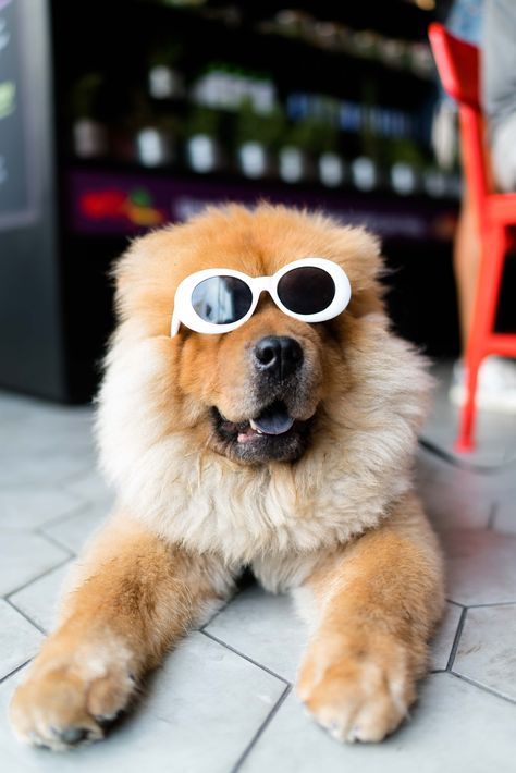 Dogs Are The Most Favorite Pets In The World There Are So Many People Are Assume That Dogs Are Part Of Their Family En 2020 Humour Chiens Chien Comportement Du Chien