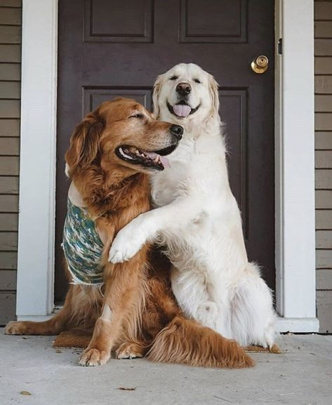 Big warrior, he is battling cancer and recently lost one of his legs. ❤️ (Source) - #adorable #animal #animals #CUTE #cuteness #dog #doggie #doggy #DOGS #golden #inspiration #landscape #love #lovely #motivation #pets #photography #PUPPIES #puppy #retriever #sweet #sweety
