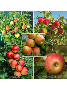 Family Apple Tree 5 Varieites On 1 Tree 5l Pot One Colour In 2020 Apple Tree Apple Fruit Trees