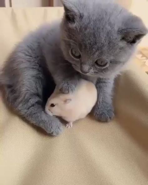 Tom & Jerry #cats #kitten #cat #kitty #kittens #pets #love #cute #beautiful #pet #puppies #animals #friend #nature #animal #puppy #happy #video #videooftheday cats, kittens, cat, kitten, video, kitty, cute, pets, pet, animals, puppy, animal, happy