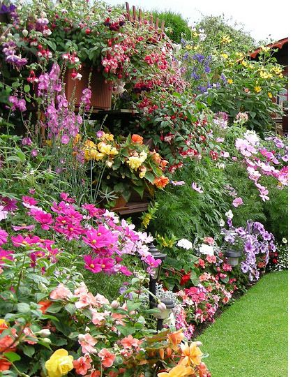 Znalezione Obrazy Dla Zapytania Surfinie Kompozycje Romantic Garden Garden Plants