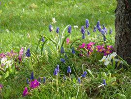 Top 12 Najpopularniejszych Wiosennych Kwiatow Ogrodowych Edible Flowers Fragrant Flowers Flowers
