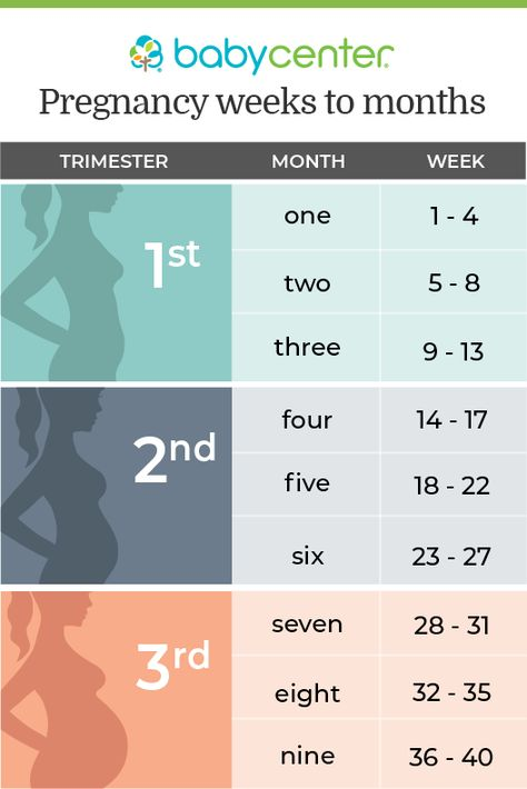 Pregnancy in weeks, months, and trimesters
