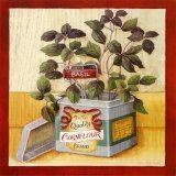 Kitchen Herbs - Basil Prints by Lisa Audit
