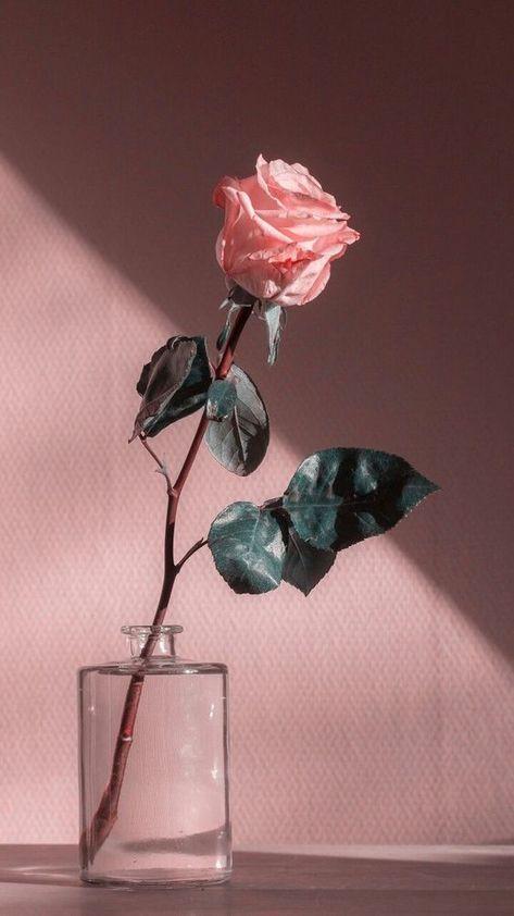 Best Flowers Aesthetic Wallpaper Vintage Ideas Aesthetic Roses Pastel Pink Aesthetic Flower Aesthetic
