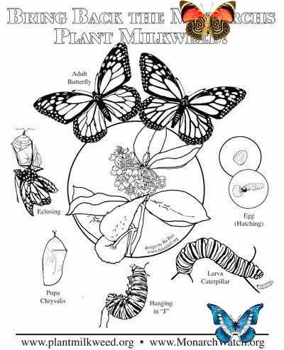 20 Monarch Butterfly Coloring Pages Printable Coloring Sheet Monarch Butterfly Coloring Pages Parent Butterfly Coloring Page Monarch Butterfly Coloring Pages
