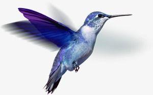 Hummingbird Png And Clipart Hummingbird Background Images Clip Art