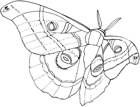 Luna Moth Moth Art Fabric Butterfly Sketches