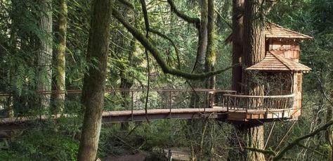 Brücke Führt Zum Baumhaus Aus Holz Im Wald Treehouse