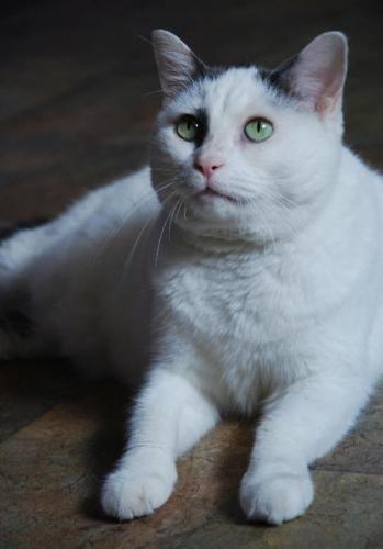 Adopt Lola On Pretty Cats Animal Shelter Pet Adoption
