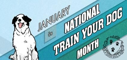 Its National Train Your Dog Month Show Us Your Best Tricks