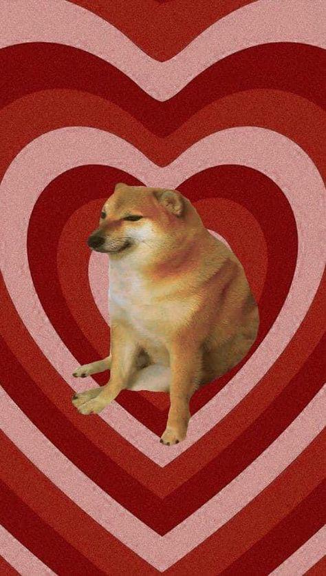 210 Ideas De Lomitos Y Michis En 2021 Mascotas Perros Mascotas Bonitas
