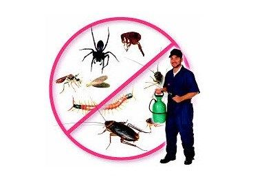 Pest Control Near Me Pest Control Pest Control Services Mosquito Protection