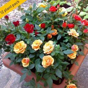 Buy Gardening Online At Nurserylive Largest Plant Nursery In India Bonsai Flower Flower Seedlings Plants