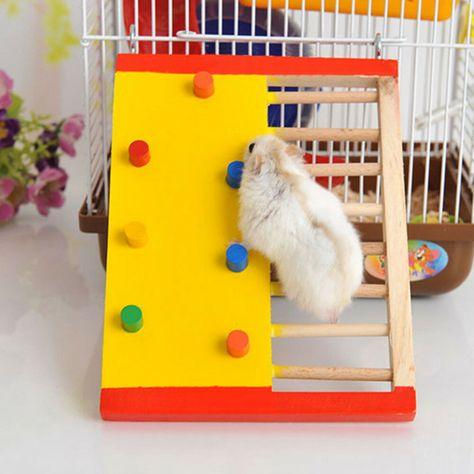 Pin On Hamster