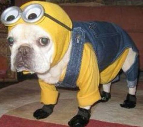 55 Adorable Halloween Pets Costumes For Your Pets Animalia