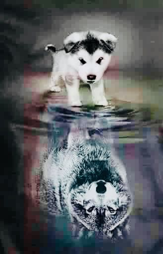 Pin By Paul Hawkins On Schone Bilder Animals Baby Animals Pictures Baby Wolves