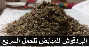 بينى فتس موقع فوائد الغذاء للصحة فائدة البردقوش للمبايض للحمل السريع لتنشيط المبايض How To Dry Basil Herbs Marjoram