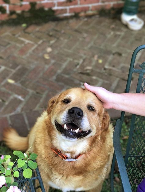 Best Dog Images On Pinterest Dogs Beautiful And Photography - Meet gluta the smiling dog that beat cancer