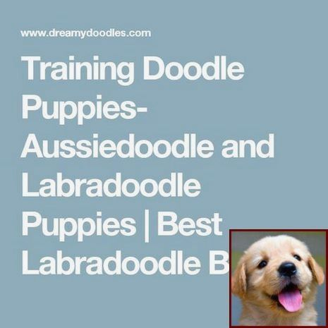 House Training Your Puppy And Dog Training Classes South East