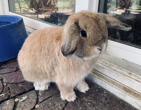 Are Rabbits Easy To Look After Rabbit Low Maintenance Pets