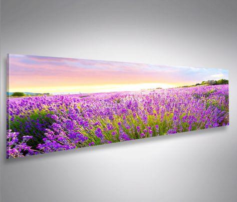 Lavendelfeld Panorama Format Bild Auf Leinwand Wandbild Edel