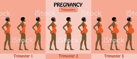 Pregnancy Trimesters Of Pregnant Afro Woman With Swimsuit