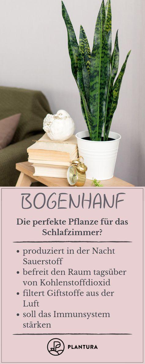 Pflanzen Im Schlafzimmer Diese Sorten Eignen Sich In 2020 Schlafzimmer Pflanzen Wohnung Pflanzen Bogenhanf