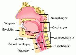 Nasal Conchae Function