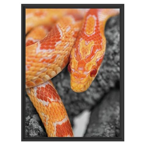 Corn Snake Resting on a Tree Framed Photographic Art Print East Urban Home Size: 80cm H x 60cm W