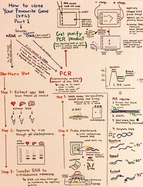 Introductory Biochemistry Flowcharts Biochemistry Biochemistry