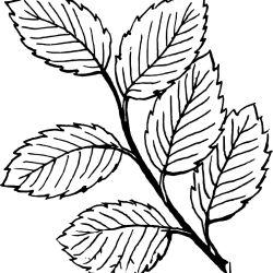 Desenhos De Folhas Desenhos E Colorir Folha Desenho Folha