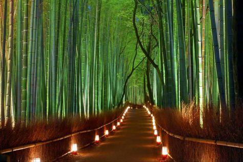 Bosco Di Bamb.Bosco Bamboo Giappone Lucciole Cerca Con Google