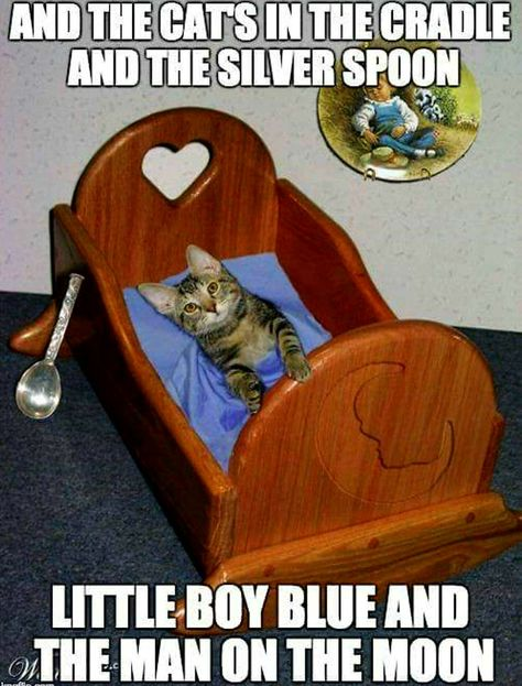 Pin By Rose L Barton On So Funny With Images Cats Cradle Little Boy Blue Funniest Cat Memes