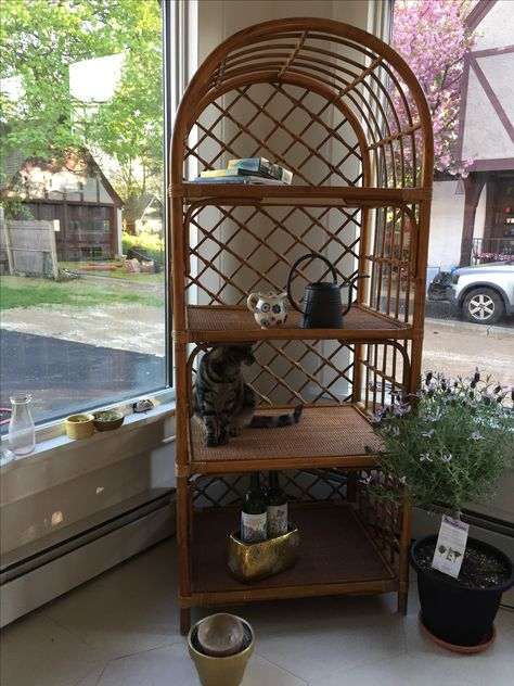 Rattan shelving unit (with a cat!). Found on Craigslist ...
