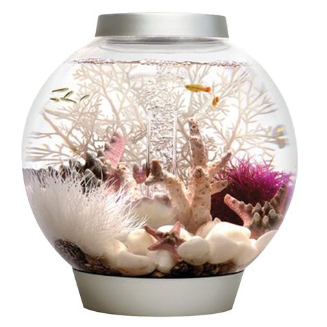 BiOrb by Oase Classic 4 Gallon Aquarium - The BiOrb by Oase Classic 4 Gallon Aquarium provides a home for your pets and makes a lovely centerpiece. Crafted from durable acrylic, this aquarium. Acrylic Aquarium, Aquarium Kit, Home Aquarium, Tropical Aquarium, Mini Aquarium, Aquarium Design, Aquarium Ideas, Tropical Fish, Biorb