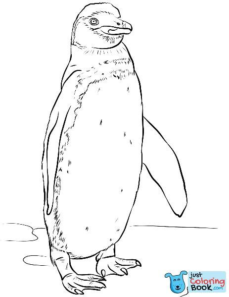 Galapagos Penguin Coloring Page Free Printable Coloring Pages Inside Realistic Galapagos Penguin Coloring Pages